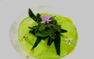 Collejas (Silene vulgaris)